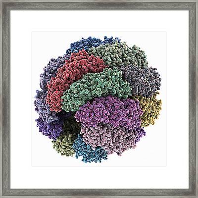 Chaperonin Folding Protein Framed Print