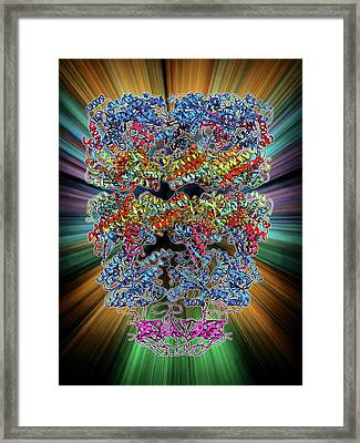 Chaperonin Protein Complex Framed Print by Laguna Design