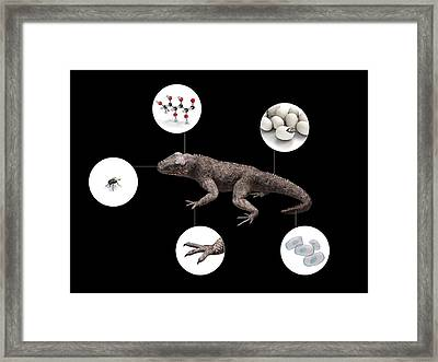 Characteristics Of Life Framed Print by Mikkel Juul Jensen