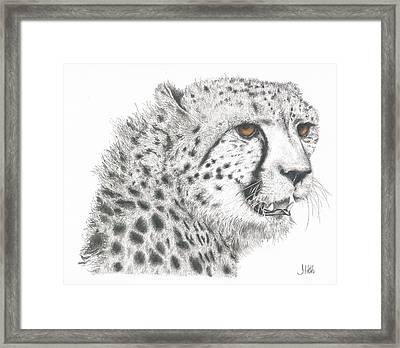 Cheetah Glory Framed Print by John Hebb