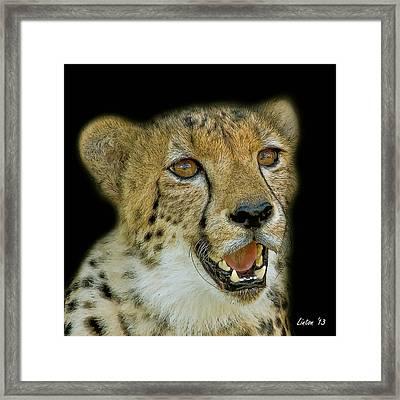 Cheetah Portrait 2  Framed Print