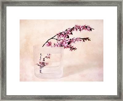 Cherry Blossom Framed Print by Jessica Jenney