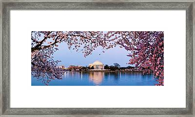 Cherry Blossom Tree With A Memorial Framed Print
