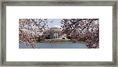 Cherry Blossom Trees In The Tidal Basin Framed Print