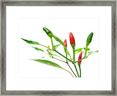 Chili Peppers Framed Print by Sinisa Botas