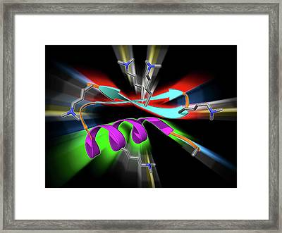 Chinese Scorpion Toxin Structure Framed Print