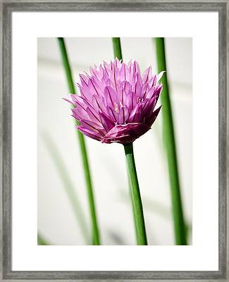 Chives Framed Print by Jouko Lehto