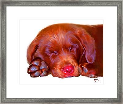 Chocolate Labrador Puppy Framed Print by Iain McDonald