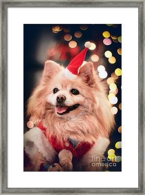 Christmas Dog Framed Print by Charline Xia