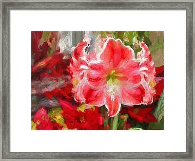Christmas Lilies Framed Print