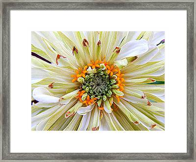 Chrysanthemum Fall In New Orleans Louisiana Framed Print
