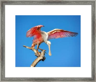 Cleared For Takeoff Framed Print by Mark Andrew Thomas