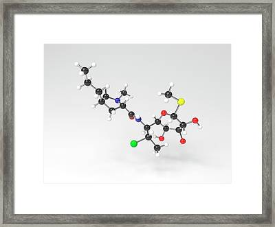 Clindamycin Antibiotic Molecule Framed Print by Indigo Molecular Images