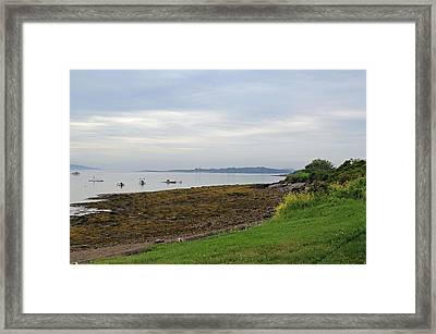 Coastal Maine Framed Print by Becca Brann
