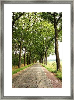 Cobblestone Country Road Framed Print by Carol Groenen