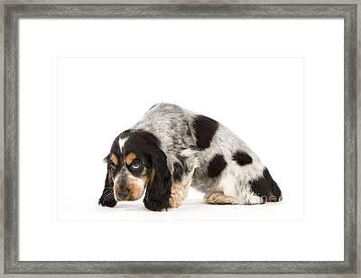 Cocker Spaniel Puppy Dog Framed Print by Jean-Michel Labat