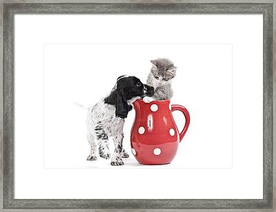 Cocker Spaniel With Kitten Framed Print by Jean-Michel Labat