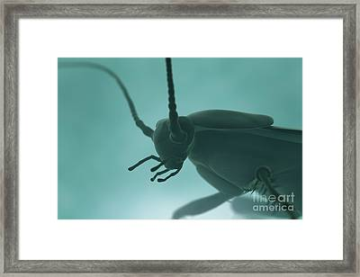 Cockroach Framed Print by Science Picture Co