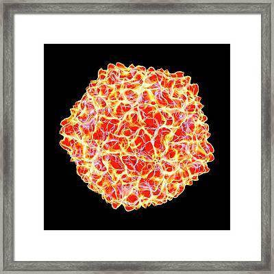 Cocksfoot Mottle Virus Framed Print by Mehau Kulyk