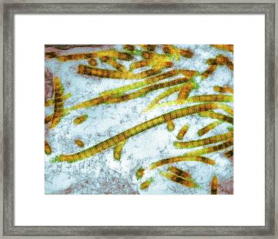 Collagen Fibrils Framed Print by Nibsc