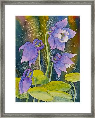Columbine Framed Print by Teresa Ascone