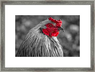 Comb Over Framed Print by Brian Stevens