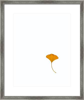 Coming To Our Senses Framed Print