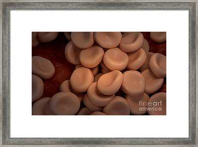 Conceptual Image Of Red Blood Cells Framed Print