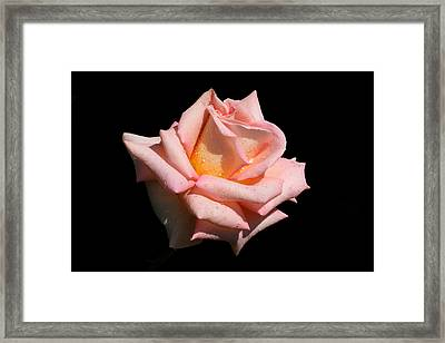 Framed Print featuring the photograph Coralie by Doug Norkum