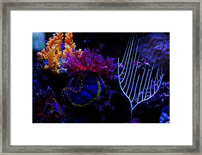 Coral Reef Creatures Framed Print