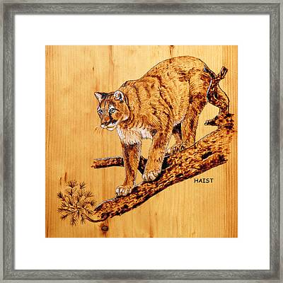 Cougar Framed Print by Ron Haist