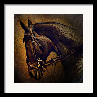 Thoroughbred Gelding Framed Prints