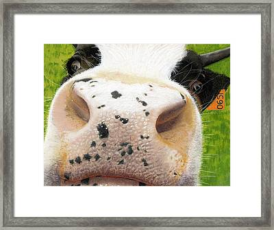Cow No. 0651 Framed Print by Carol McCarty