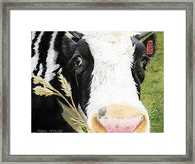 Cow No. 0652 Framed Print by Carol McCarty