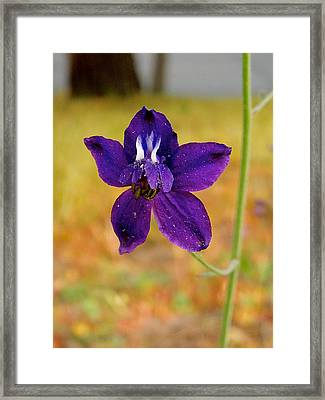 Cow Poison In Park Sierra-ca Framed Print by Ruth Hager