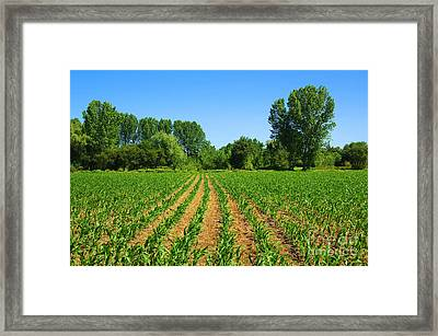 Cultivated Land Framed Print