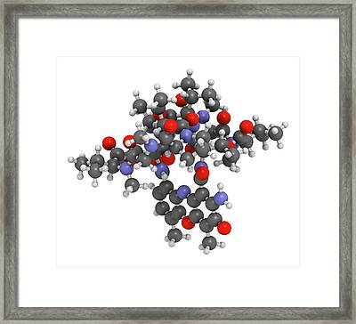 Dactinomycin Cancer Drug Molecule Framed Print by Molekuul