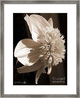 Dahlia Named Platinum Blonde Framed Print by J McCombie
