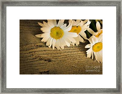 Daisies Framed Print by Mythja  Photography
