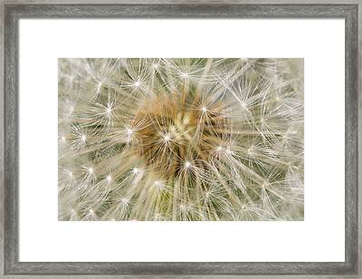 Dandelion Seedhead Noord-holland Framed Print by Mart Smit