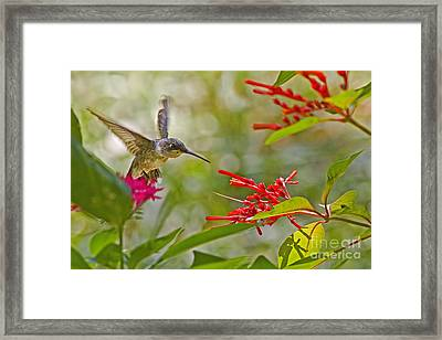 Decisions Framed Print by Gary Holmes