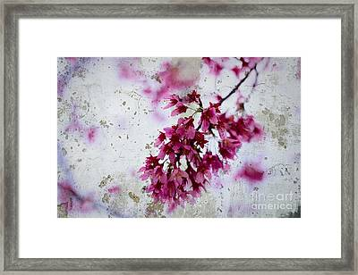 Deep Pink Flowers With Grey Concrete Texture Background Framed Print