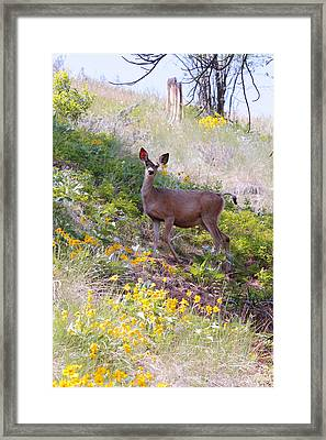 Deer In Wildflowers Framed Print by Athena Mckinzie
