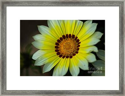 Delicate Designs Framed Print by Syed Aqueel