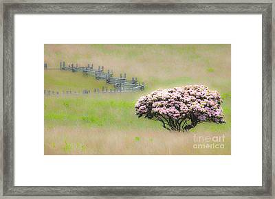 Delicate Meadow - A Tranquil Moments Landscape Framed Print by Dan Carmichael