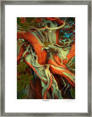 Deranged Redwood Framed Print