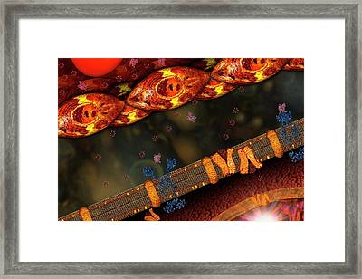 Diabetes Framed Print by Carol & Mike Werner