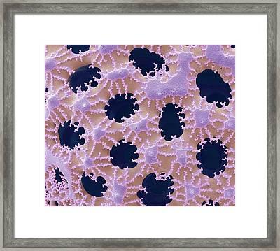 Diatom Detail Framed Print