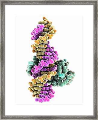 Dna And Mecp2 Complex Framed Print