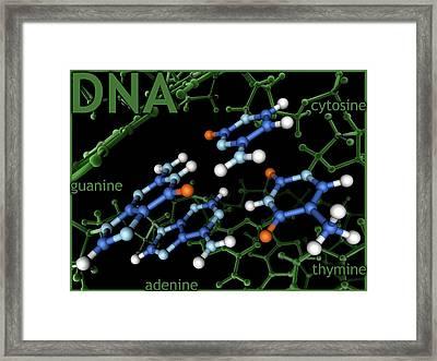 Dna Nucleotides Framed Print
